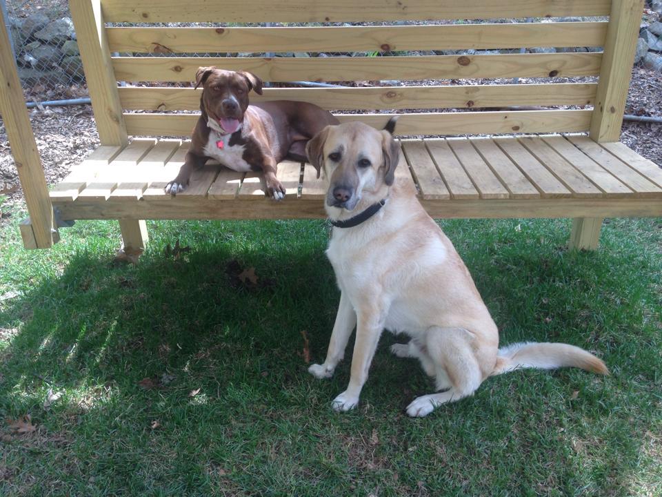 Hank FKA Zeki & Hailey