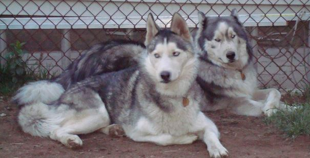 Mieshka and Bear FKA Silver