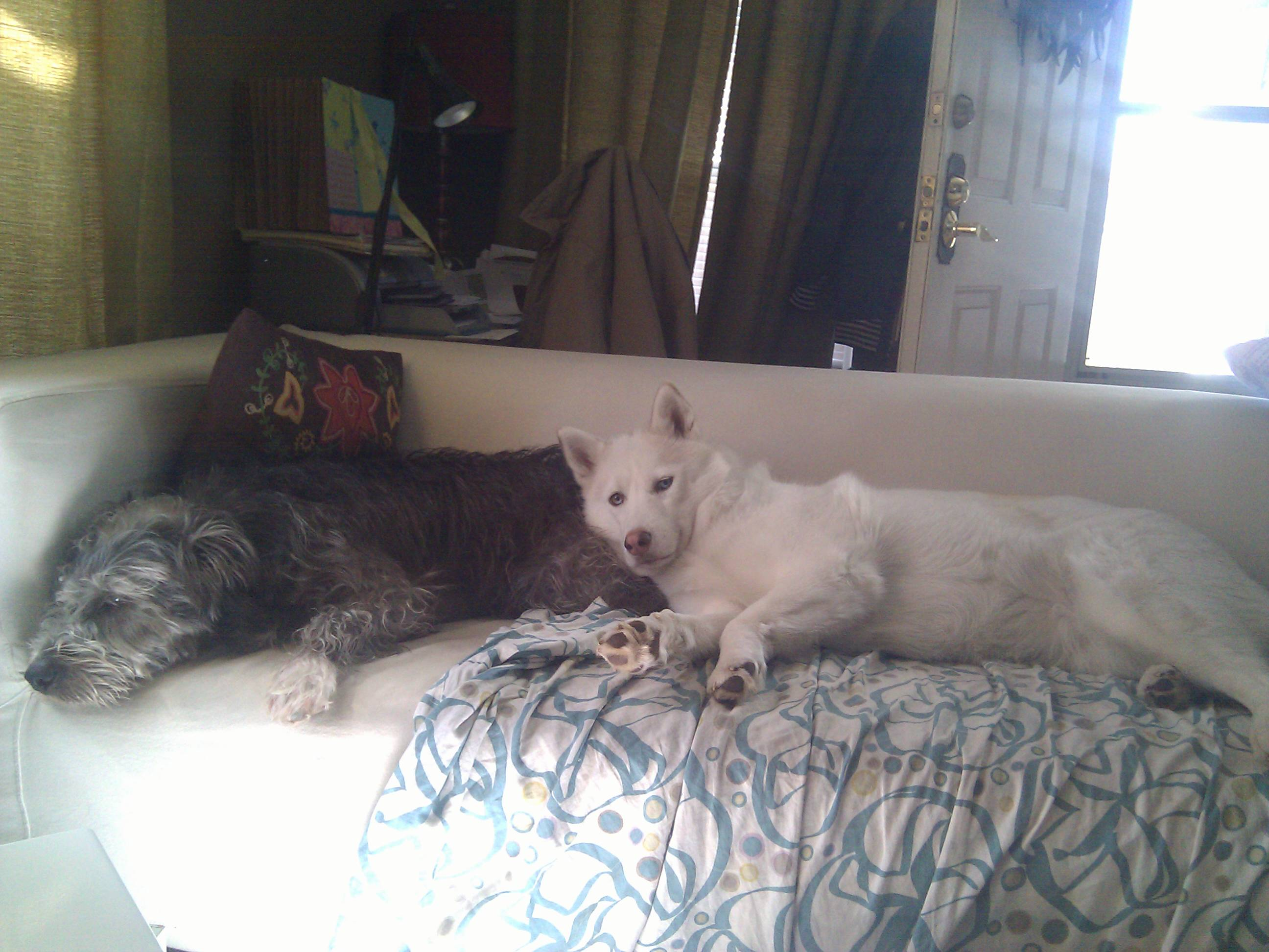 Odin FKA Morgan and Gracie